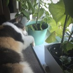 Tulle passer planter inden flytning