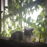 Tigertulle passer fortsat på planter