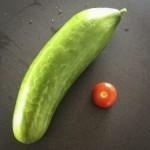 Årets første aggurk og tomat.