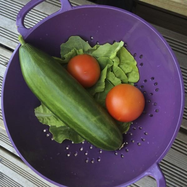 Agurk og tomater fra drivhuset - salat fra køkkenhaven