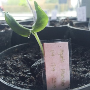 Og her er et skilt ved en fin lille agurkespire